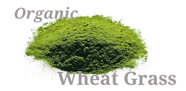 Wheat Grass powder in nagpur